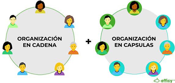 organizacion de ventas en Efficy